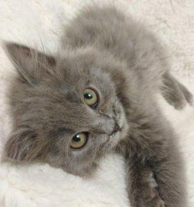 Замечательный котёнок