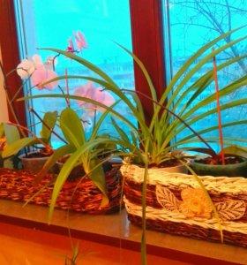 Кашпо плетеные для цветов