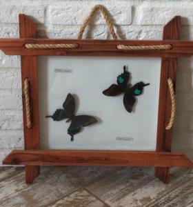 Бабочки в рамках