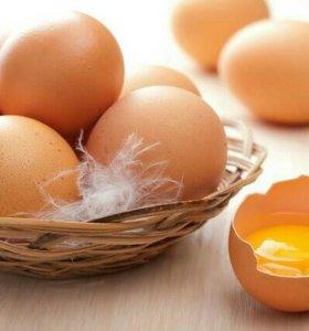 Свойское куриное яйцо
