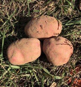 Картофель домашний Доставка