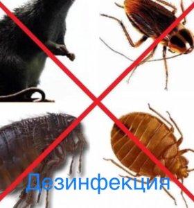 клопов и тараканов дезинфекция