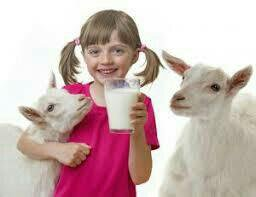 Козье молоко,творог,масло