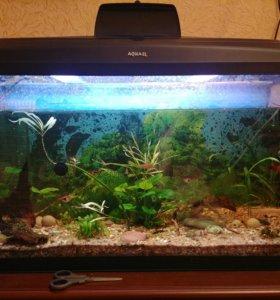 Аквариум с co2 рыбками и всем сопутствующим