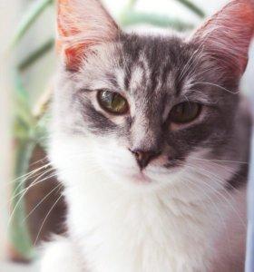 Стерилизованная кошка Фрося