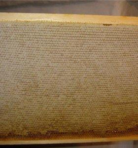 Мёд в сотах корпусная рамка