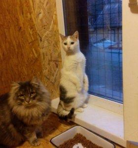 Передержка кошек. Дмитровское шоссе