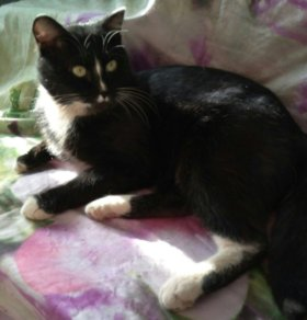 Кот из магазина «Магнит»