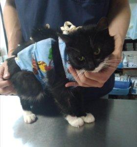 Кошка мышеловка