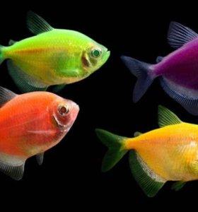 Предлагаем большой ассортимент аквариумных рыбок и
