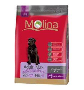 Сухой корм Molina Adult Maxi для собак
