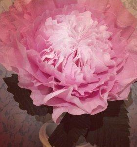 Ростовые цветы - Пионовидная роза