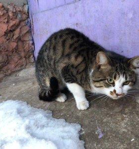 Котик ищет семью