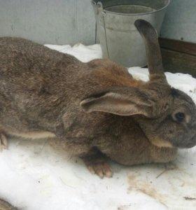 Кролики в Михнево
