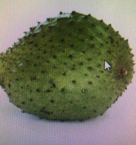 Семена фрукта нони или в Таиланде называют гуанаба
