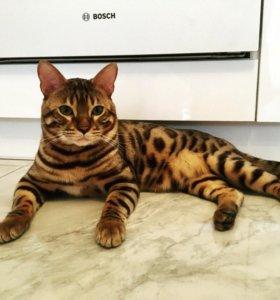Бенгальские котята 🐈🐆🐈🐆🐈 родились 25.03.2018