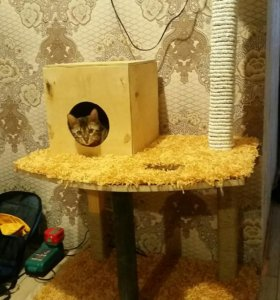 Продам бенгальскую кошку недорого