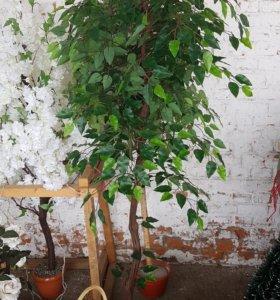 Дерево Фикус 1.55м искуст