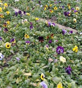 Цветы для посадки