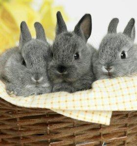 Кролики мясные на разведение