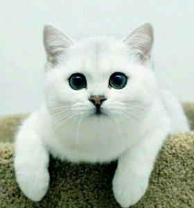 Домашняя передержка кошек.