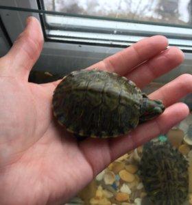 Черепахи+аквариум