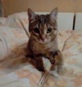 Котёнок ( В ДОБРЫЕ РУКИ)