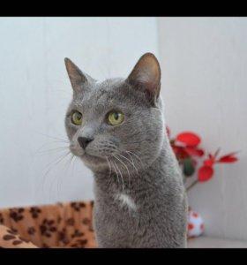 ласковый кот в добрые руки