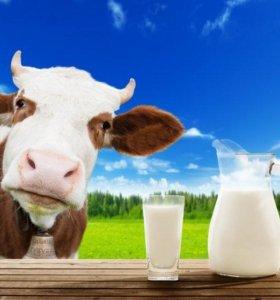 Домашняя молочка