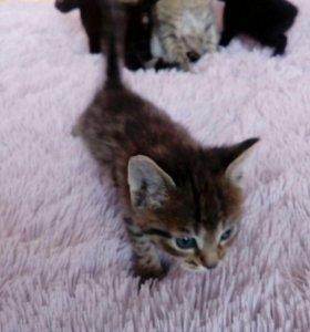 Очаровательные котята в добрые руки