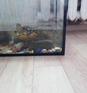Красноухие 2 черепахи