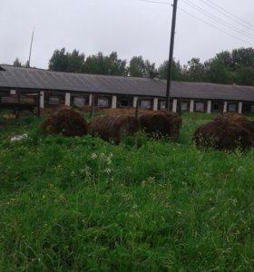 Ферма в Ярославской обл. 200 км.от МКАД