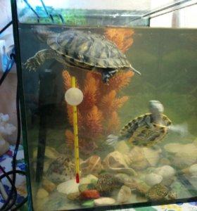 Продам аквариум и двух черепах.