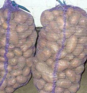 Оптовая продажа картофеля, яблок