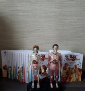 Детская серия книг тело человека с фигурами разбор
