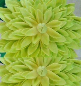 Хризантема интерьерная