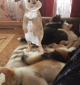 Отдам котёнка рыженького!К лотку приучен!☺️