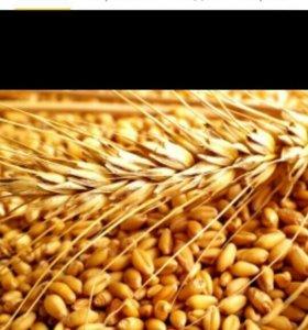 Пшеница,дробленка,кормосмесь,ракушка для птиц.