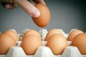 Инкубационое яйцо.