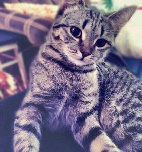Кошечка, вязка