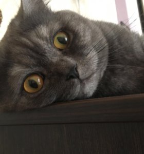 Котик для случки