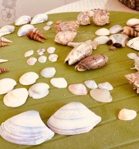 Набор океанических ракушек
