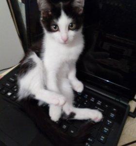 Отдам котенка,девочка 3 месяца.