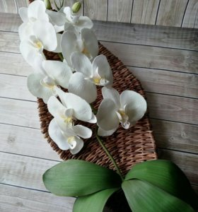 Орхидея на листе