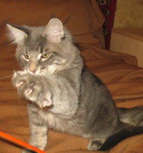 Котёнок-куненок