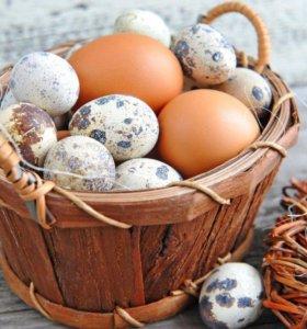 куриные яйца домашние.