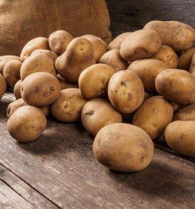 Картошка деревенская 80 руб. ведро