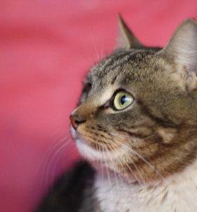 Котик 3 года