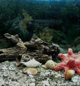Обслуживание аквариумов любых обьемов