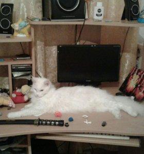 Кошечка ищет кота для вязки